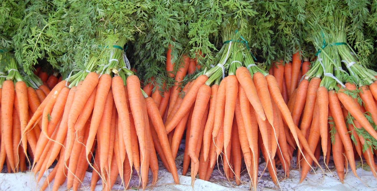 Морковь польза