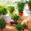 Комнатные растения атмосфера в доме