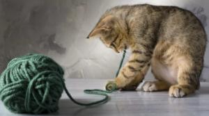Кошка съела нитку что делать