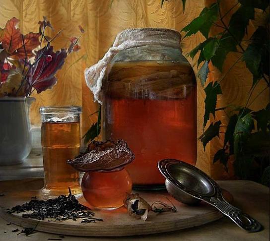 Как правильно приготовить чайный гриб с нуля